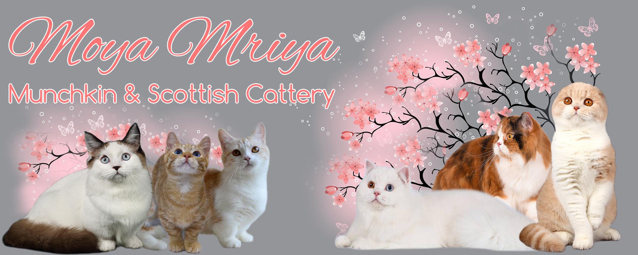 Moya Mriya
